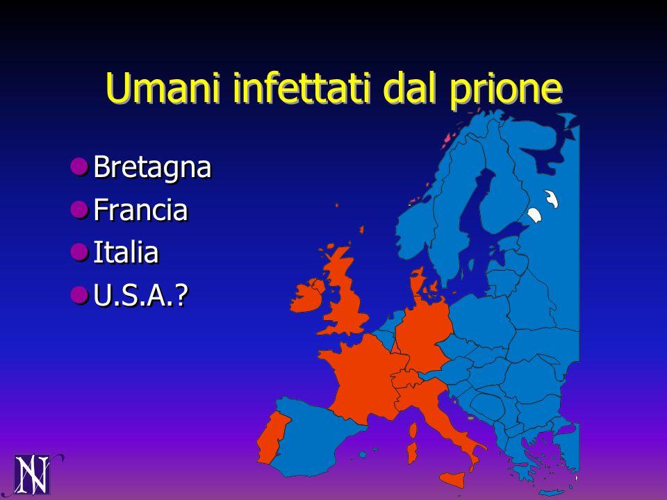 Umani infettati dal prione Bretagna Francia Italia U.S.A.? Bretagna Francia Italia U.S.A.?