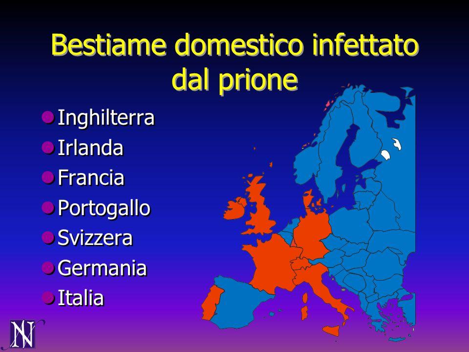 Bestiame domestico infettato dal prione Inghilterra Irlanda Francia Portogallo Svizzera Germania Italia Inghilterra Irlanda Francia Portogallo Svizzer