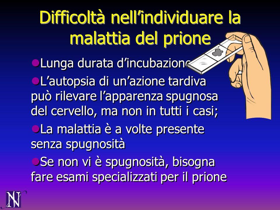 Difficoltà nellindividuare la malattia del prione Lunga durata dincubazione Lautopsia di unazione tardiva può rilevare lapparenza spugnosa del cervell