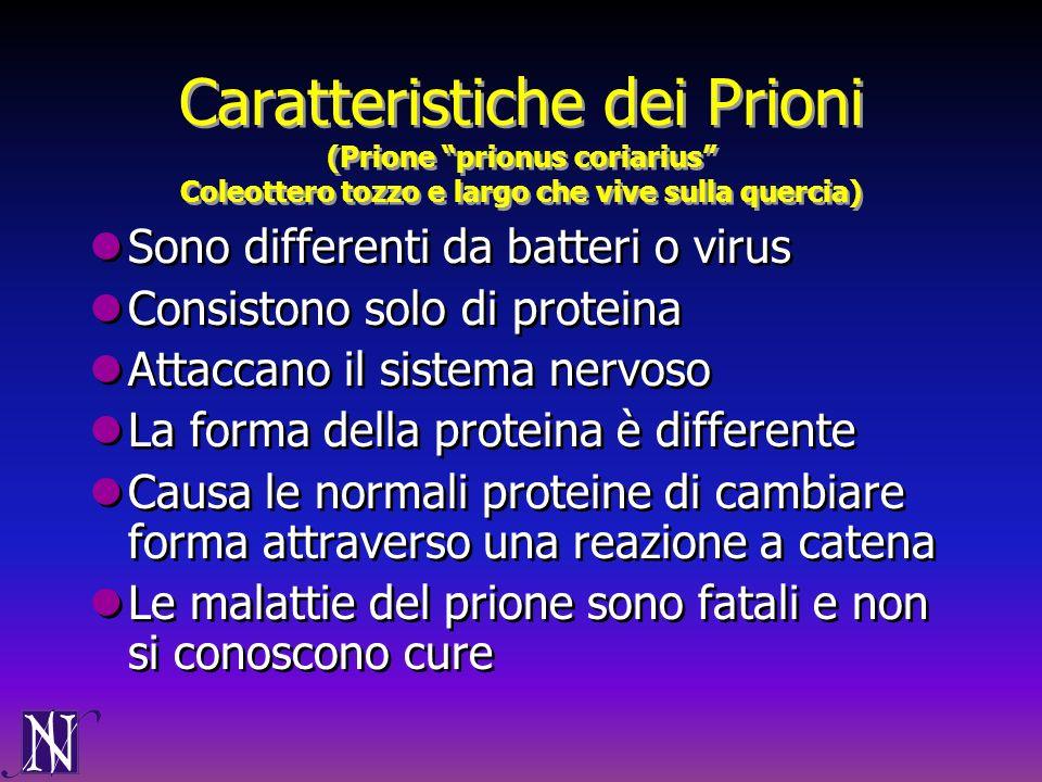 Caratteristiche dei Prioni (Prione prionus coriarius Coleottero tozzo e largo che vive sulla quercia) Sono differenti da batteri o virus Consistono so