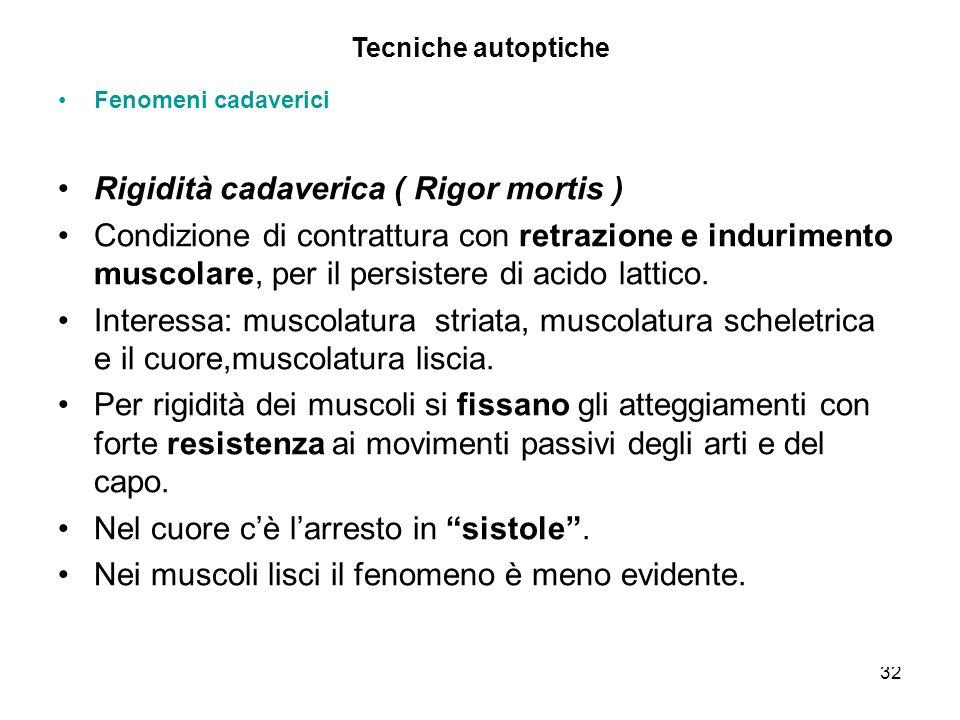 32 Tecniche autoptiche Fenomeni cadaverici Rigidità cadaverica ( Rigor mortis ) Condizione di contrattura con retrazione e indurimento muscolare, per