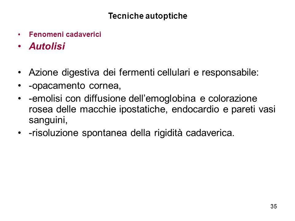 35 Tecniche autoptiche Fenomeni cadaverici Autolisi Azione digestiva dei fermenti cellulari e responsabile: -opacamento cornea, -emolisi con diffusion