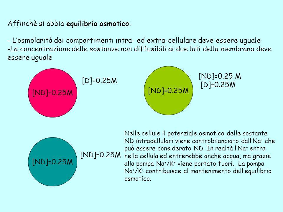 Affinchè si abbia equilibrio osmotico: - Losmolarità dei compartimenti intra- ed extra-cellulare deve essere uguale -La concentrazione delle sostanze