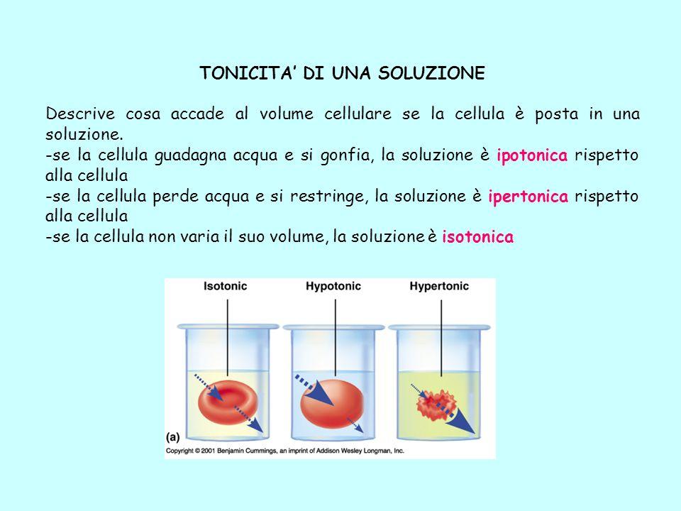TONICITA DI UNA SOLUZIONE Descrive cosa accade al volume cellulare se la cellula è posta in una soluzione. -se la cellula guadagna acqua e si gonfia,