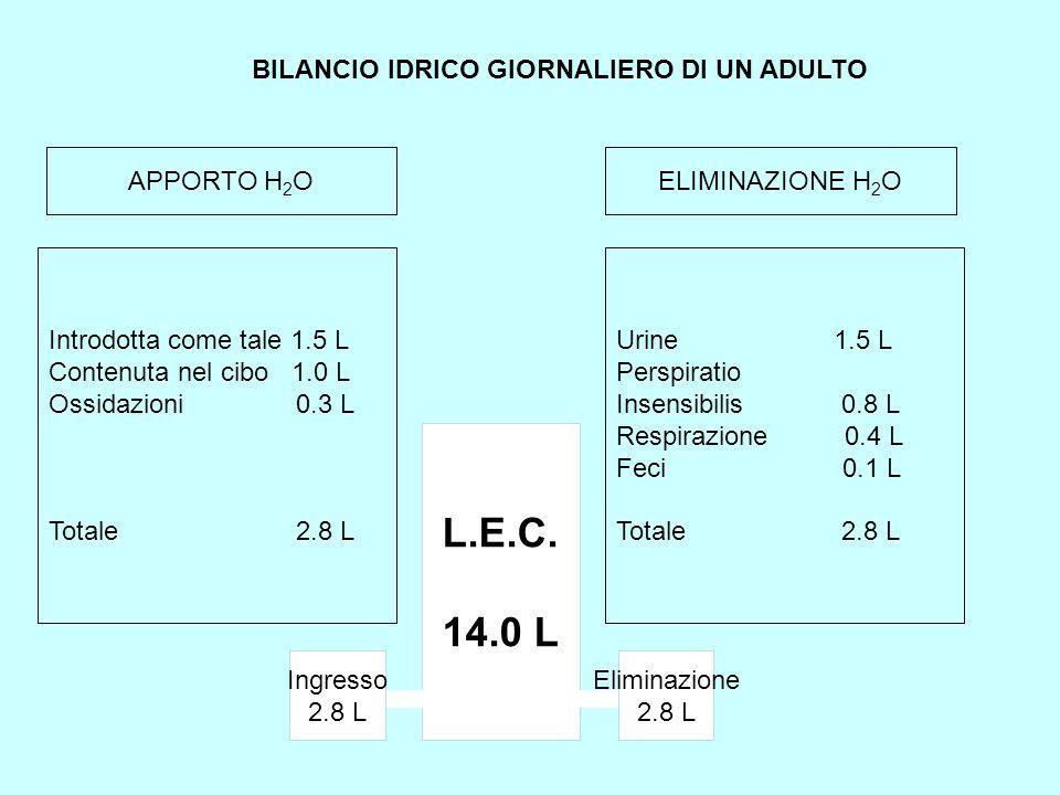 BILANCIO IDRICO GIORNALIERO DI UN ADULTO Introdotta come tale 1.5 L Contenuta nel cibo 1.0 L Ossidazioni 0.3 L Totale 2.8 L APPORTO H 2 OELIMINAZIONE