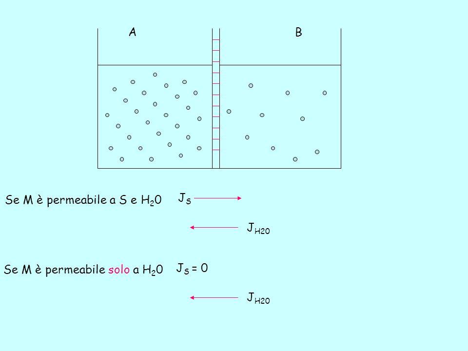 P, contropressione, che bilancia il potenziale osmotico, π P - Due compartimenti di uguale volume sono separati da una membrana che è permeabile solo allacqua (membrana semipermeabile) e che non permette il passaggio di soluto.