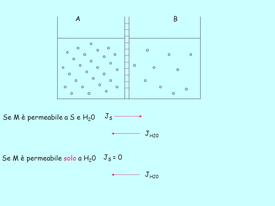 Se M è permeabile a S e H 2 0 JSJS J H20 Se M è permeabile solo a H 2 0 J S = 0 J H20 A B