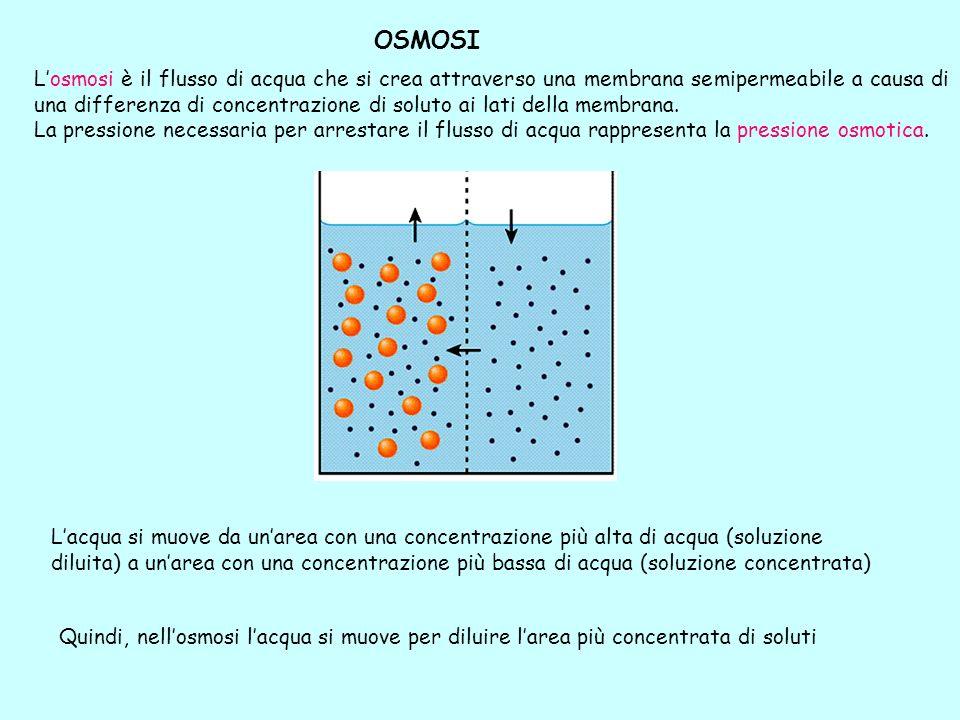 OSMOSI Lacqua si muove da unarea con una concentrazione più alta di acqua (soluzione diluita) a unarea con una concentrazione più bassa di acqua (solu