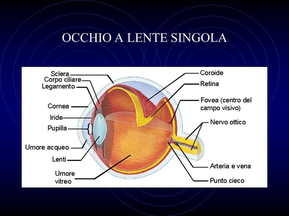 OCCHIO A LENTE SINGOLA