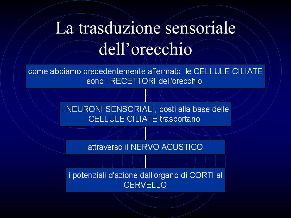 La trasduzione sensoriale dellorecchio