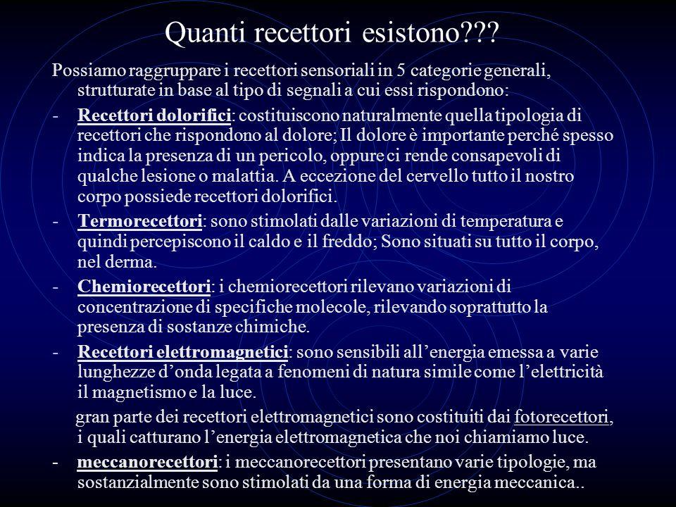 Quanti recettori esistono??? Possiamo raggruppare i recettori sensoriali in 5 categorie generali, strutturate in base al tipo di segnali a cui essi ri