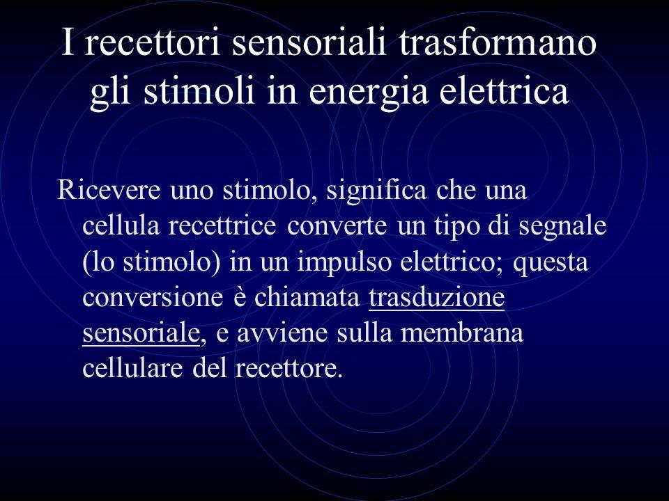 I recettori sensoriali trasformano gli stimoli in energia elettrica Ricevere uno stimolo, significa che una cellula recettrice converte un tipo di seg