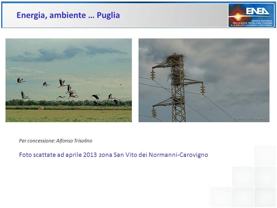 Per concessione: Alfonso Trisolino Foto scattate ad aprile 2013 zona San Vito dei Normanni-Carovigno