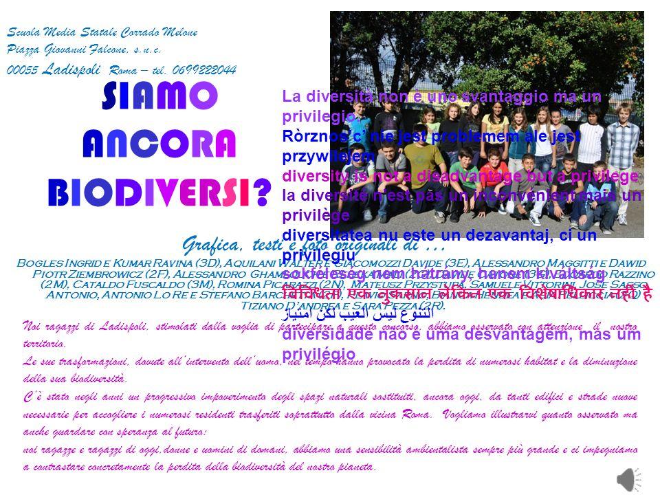 SIAMOSIAMO ANCORAANCORA BIODIVERSI? Scuola Media Statale Corrado Melone Piazza Giovanni Falcone, s.n.c. 00055 Ladispoli Roma – tel. 0699222044 Grafica
