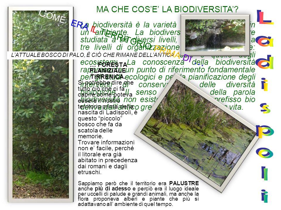 MA CHE COSE LA BIODIVERSITA? La biodiversità è la varietà delle forme viventi in un ambiente. La biodiversità viene in genere studiata a tre diversi l