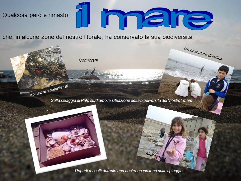 Qualcosa però è rimasto… che, in alcune zone del nostro litorale, ha conservato la sua biodiversità. Reperti raccolti durante una nostra escursione su