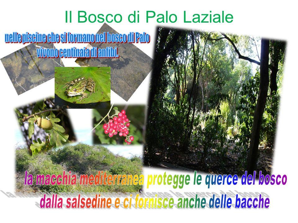 Il Bosco di Palo Laziale