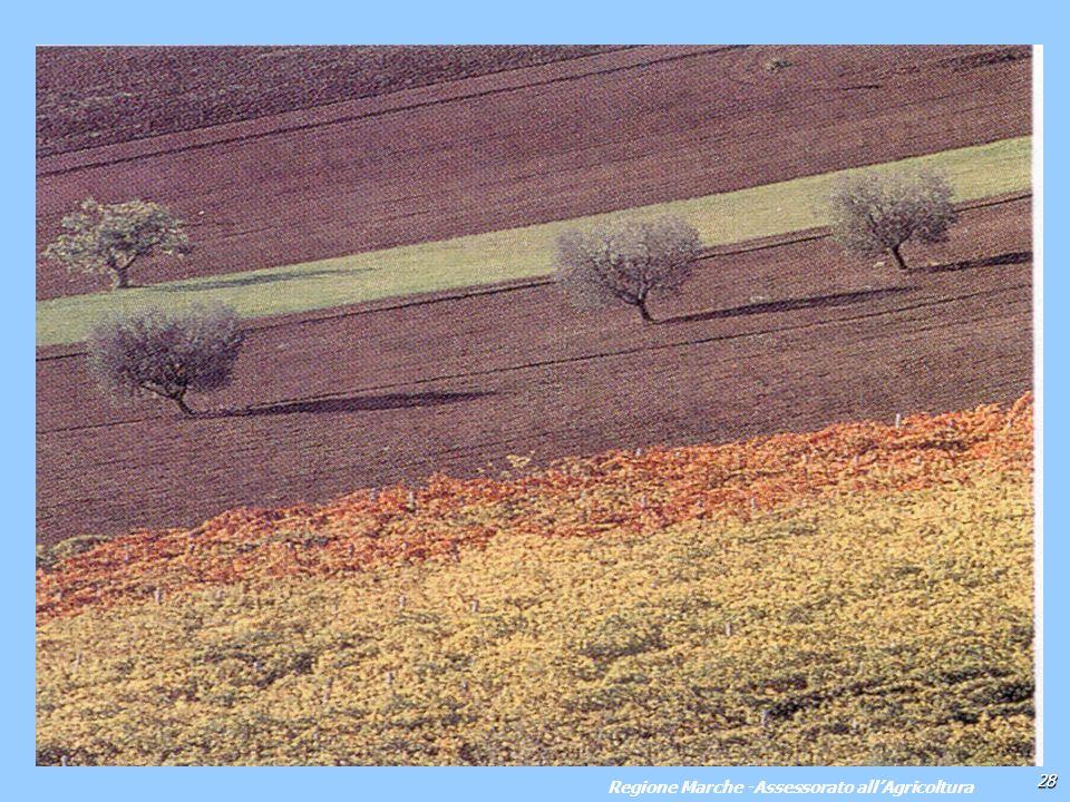 28 Regione Marche -Assessorato allAgricoltura