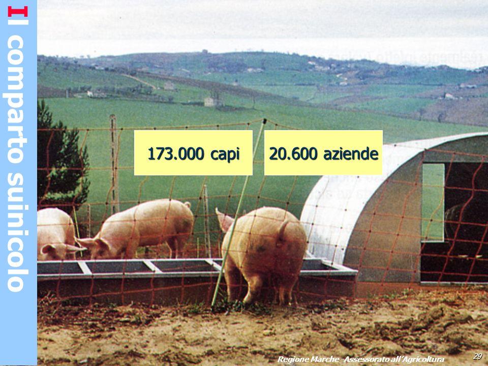 Il comparto suinicolo 29 Regione Marche -Assessorato allAgricoltura 173.000 capi 20.600 aziende