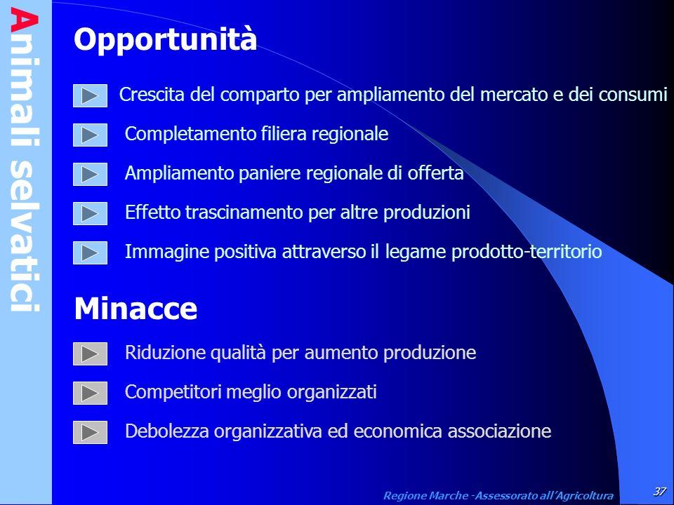 Animali selvatici 37 Regione Marche -Assessorato allAgricoltura Opportunità Crescita del comparto per ampliamento del mercato e dei consumi Completame