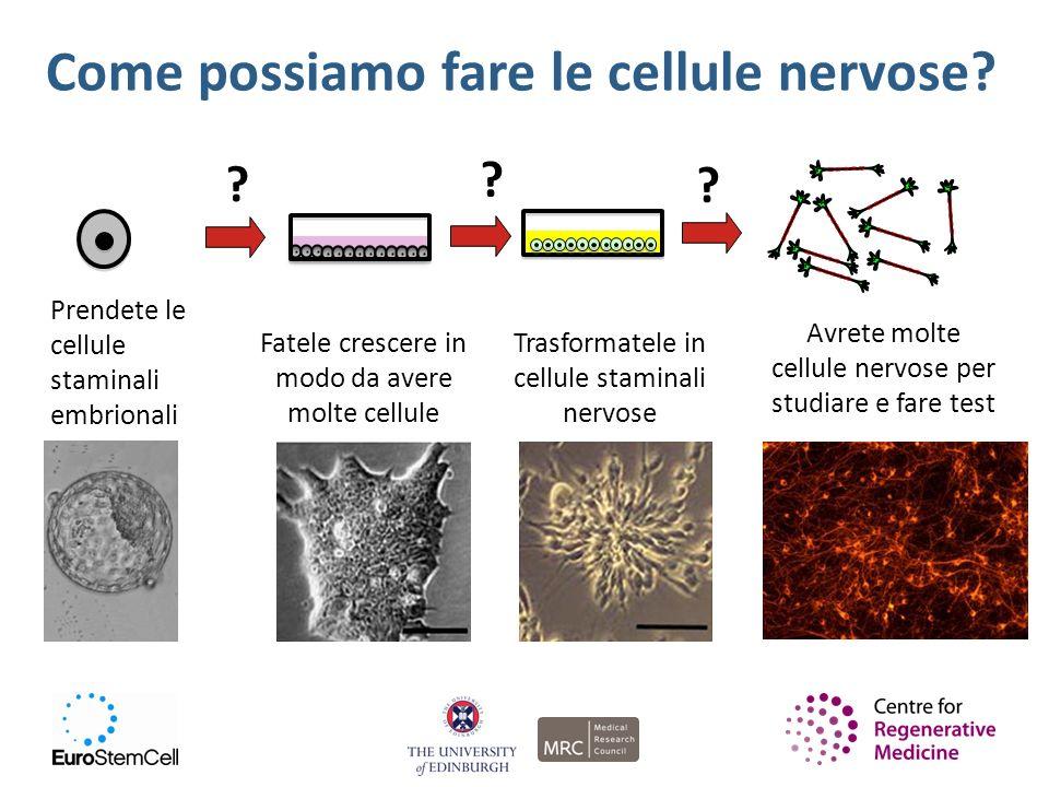 Come possiamo fare le cellule nervose? Prendete le cellule staminali embrionali ? Fatele crescere in modo da avere molte cellule ? Trasformatele in ce
