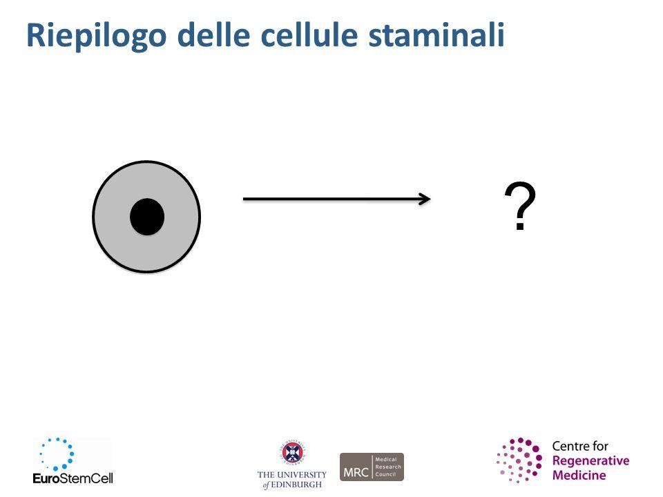 Le cellule staminali sono nel nostro corpo superficie degli occhi cervello e sistema nervoso muscoli addome (pancia) midollo spinale pelle Qualche volontario?