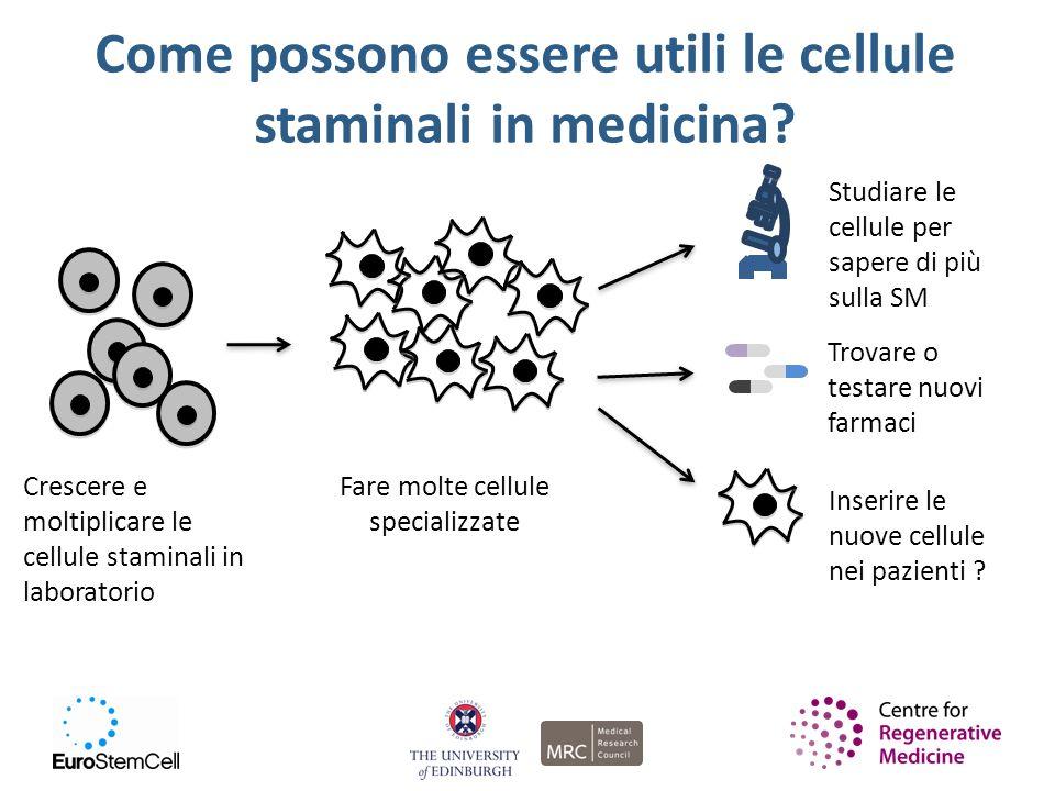 Come possono essere utili le cellule staminali in medicina? Crescere e moltiplicare le cellule staminali in laboratorio Fare molte cellule specializza