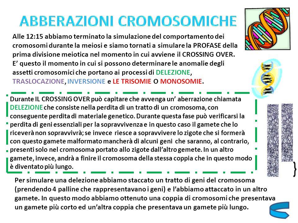 Alle 12:15 abbiamo terminato la simulazione del comportamento dei cromosomi durante la meiosi e siamo tornati a simulare la PROFASE della prima divisi