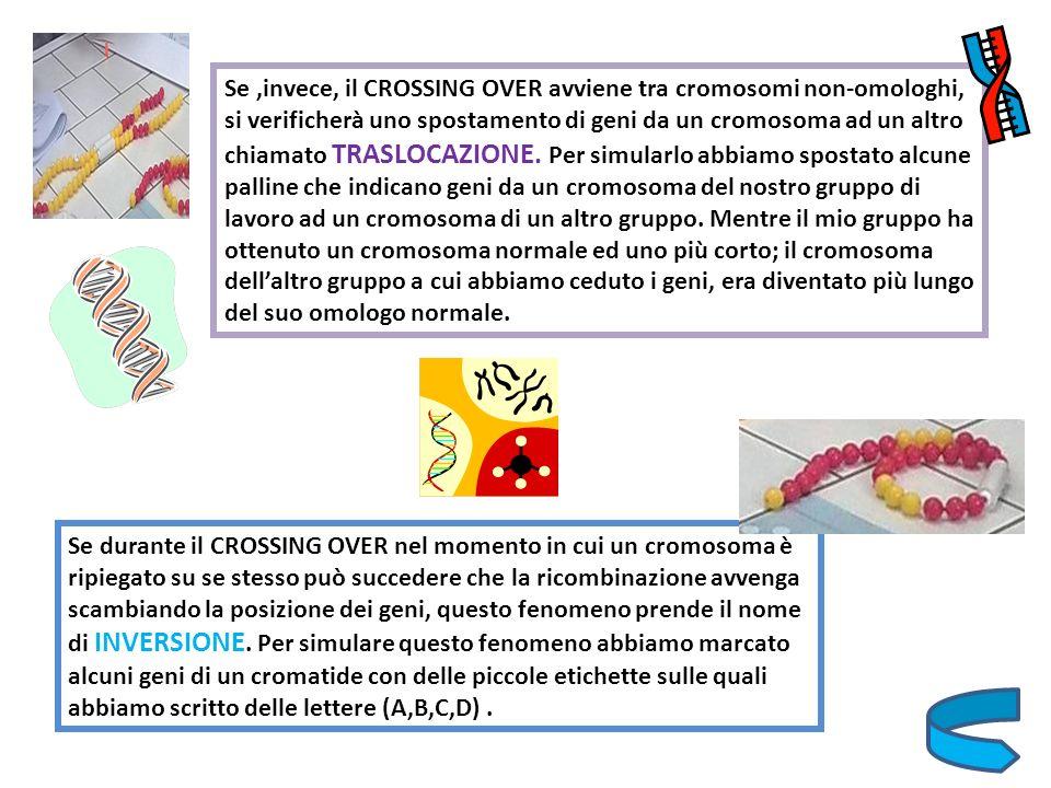 Se,invece, il CROSSING OVER avviene tra cromosomi non-omologhi, si verificherà uno spostamento di geni da un cromosoma ad un altro chiamato TRASLOCAZI