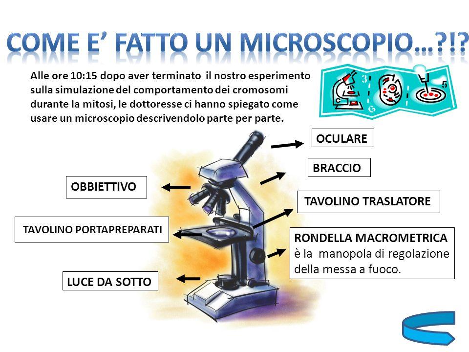 Dopo aver svolto queste operazioni preparatorie al buon utilizzo del microscopio, le dottoresse ci hanno diviso in due gruppi che in fine avrebbero dovuto svolgere luno il lavoro dellaltro.