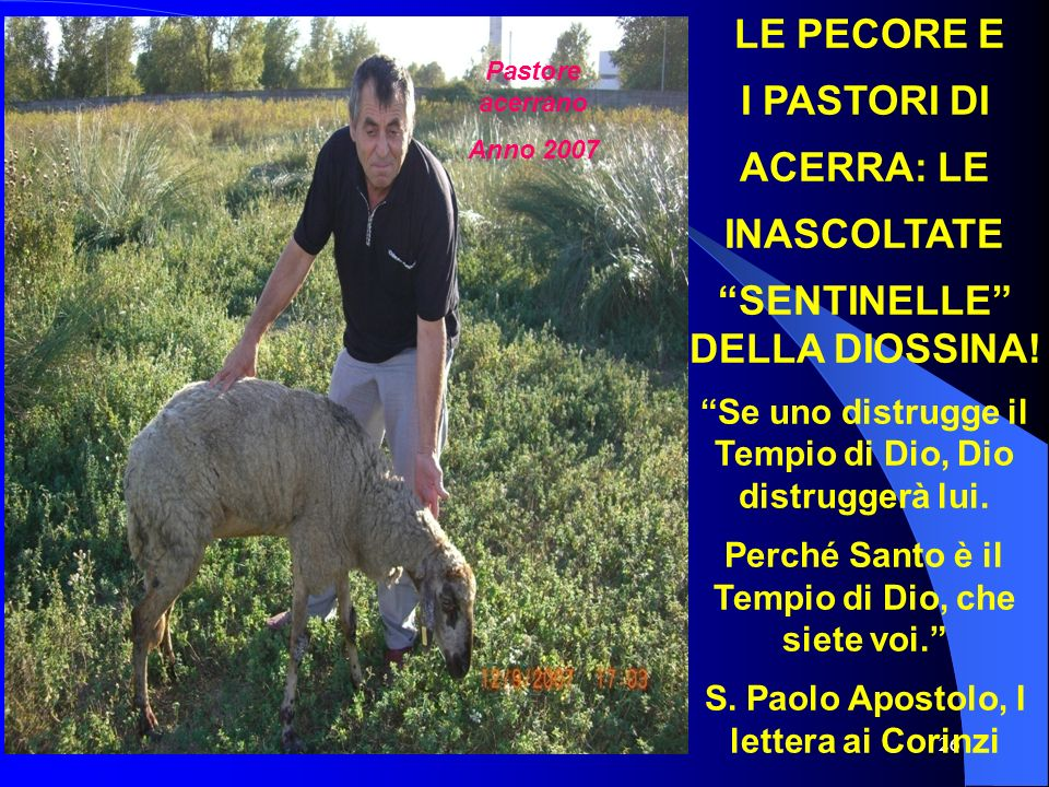 26 LE PECORE E I PASTORI DI ACERRA: LE INASCOLTATE SENTINELLE DELLA DIOSSINA! Se uno distrugge il Tempio di Dio, Dio distruggerà lui. Perché Santo è i