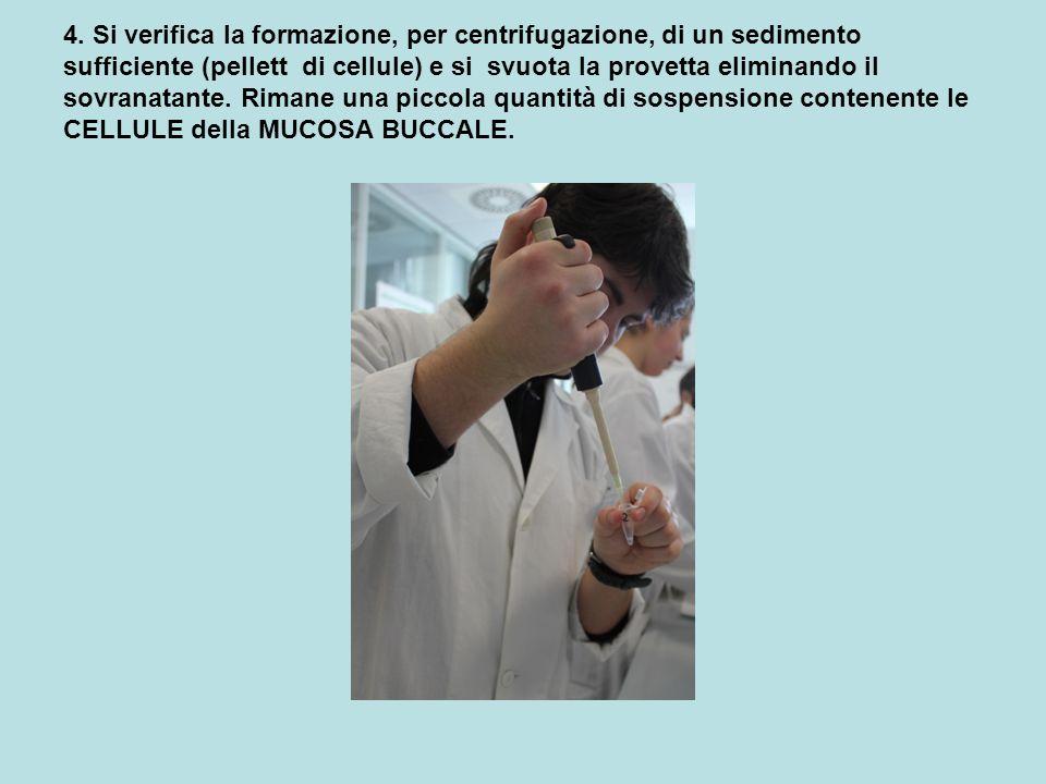 4. Si verifica la formazione, per centrifugazione, di un sedimento sufficiente (pellett di cellule) e si svuota la provetta eliminando il sovranatante