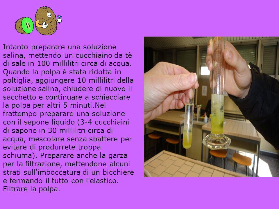 Intanto preparare una soluzione salina, mettendo un cucchiaino da tè di sale in 100 millilitri circa di acqua. Quando la polpa è stata ridotta in polt