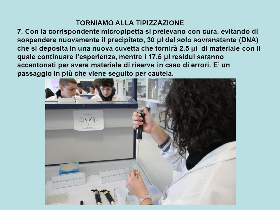 TORNIAMO ALLA TIPIZZAZIONE 7. Con la corrispondente micropipetta si prelevano con cura, evitando di sospendere nuovamente il precipitato, 30 μl del so