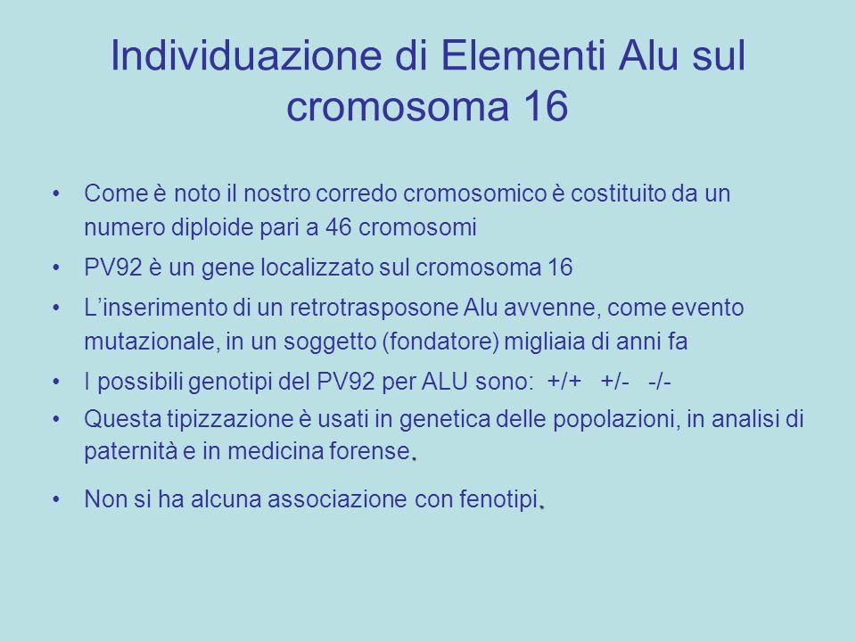 Individuazione di Elementi Alu sul cromosoma 16 Come è noto il nostro corredo cromosomico è costituito da un numero diploide pari a 46 cromosomi PV92