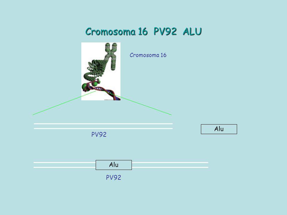 11.Terminata la PCR ogni allievo riprende la propria provetta con il DNA amplificato.