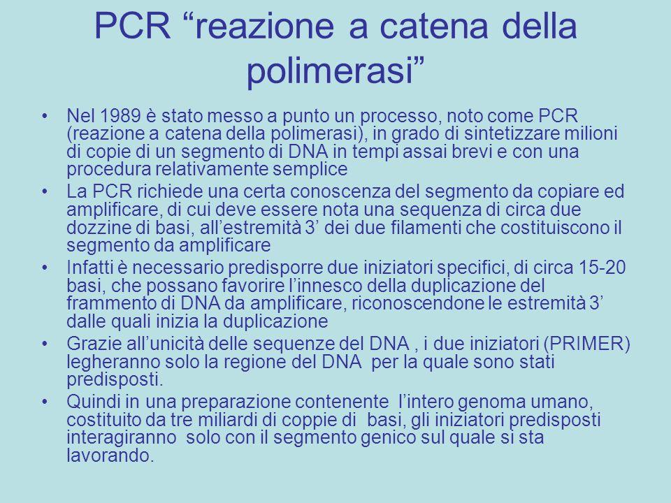 PCR reazione a catena della polimerasi Nel 1989 è stato messo a punto un processo, noto come PCR (reazione a catena della polimerasi), in grado di sin