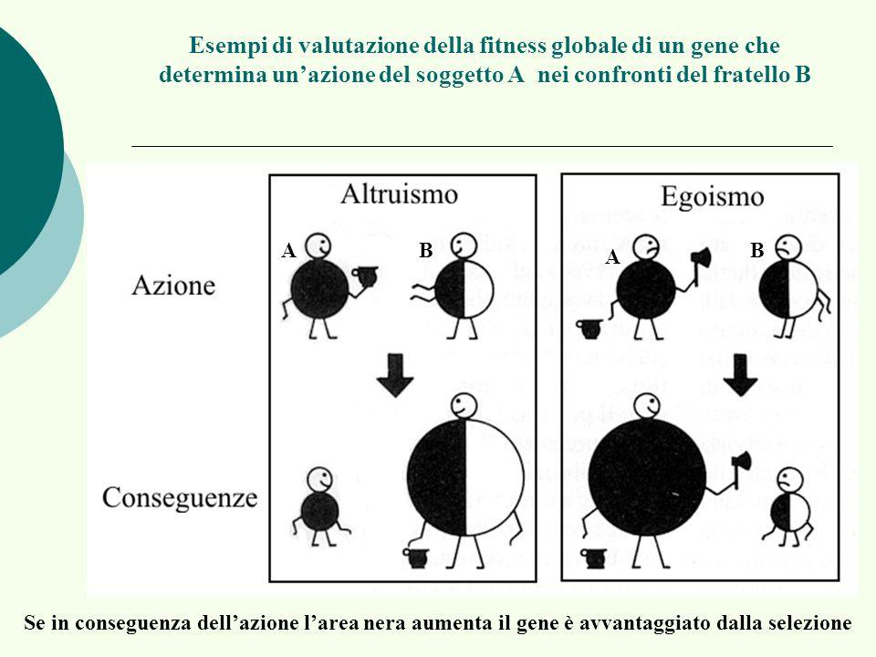 Esempi di valutazione della fitness globale di un gene che determina unazione del soggetto A nei confronti del fratello B Se in conseguenza dellazione