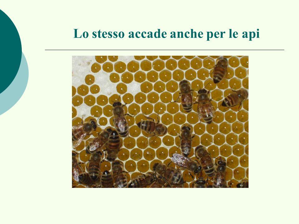 Lo stesso accade anche per le api