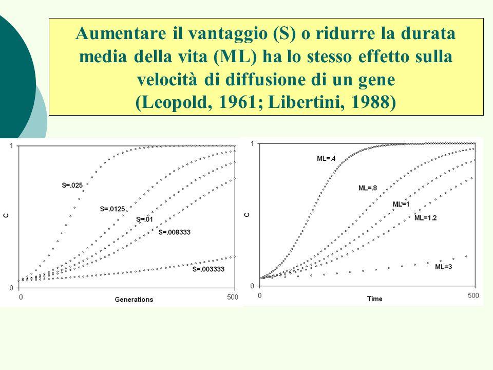 Aumentare il vantaggio (S) o ridurre la durata media della vita (ML) ha lo stesso effetto sulla velocità di diffusione di un gene (Leopold, 1961; Libe