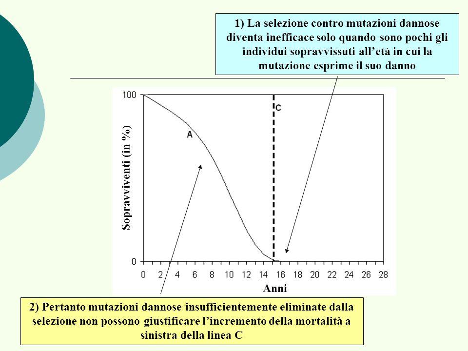 Anni Sopravviventi (in %) 1) La selezione contro mutazioni dannose diventa inefficace solo quando sono pochi gli individui sopravvissuti alletà in cui