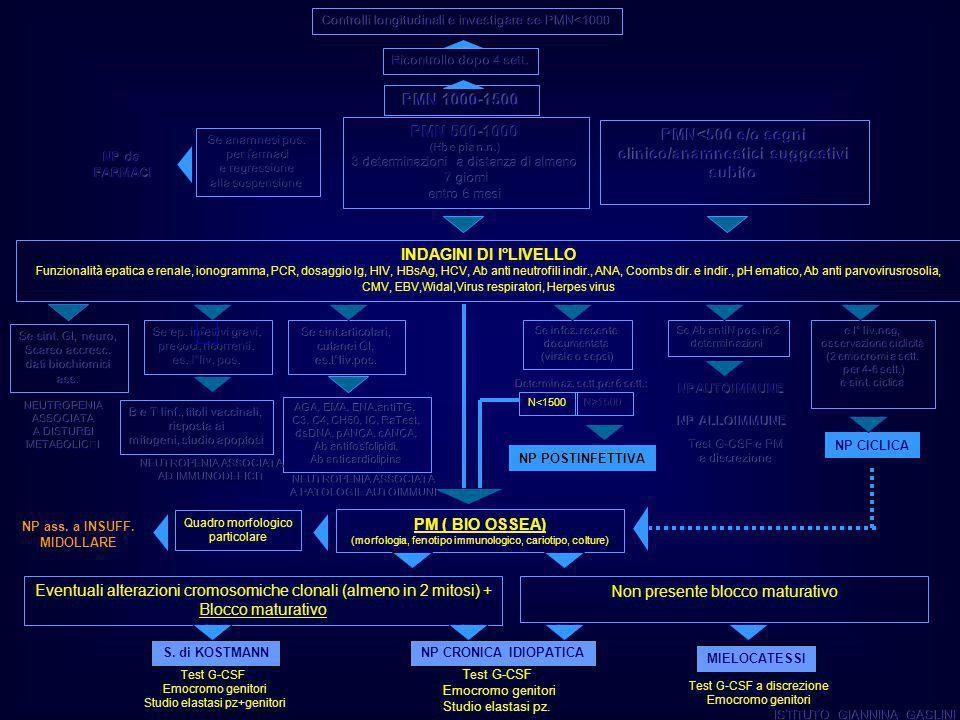 PM (BIO OSSEA) (morfologia, fenotipo immunologico, cariotipo, colture) Eventuali alterazioni cromosomiche clonali (almeno in 2 mitosi) + Blocco maturativo S.
