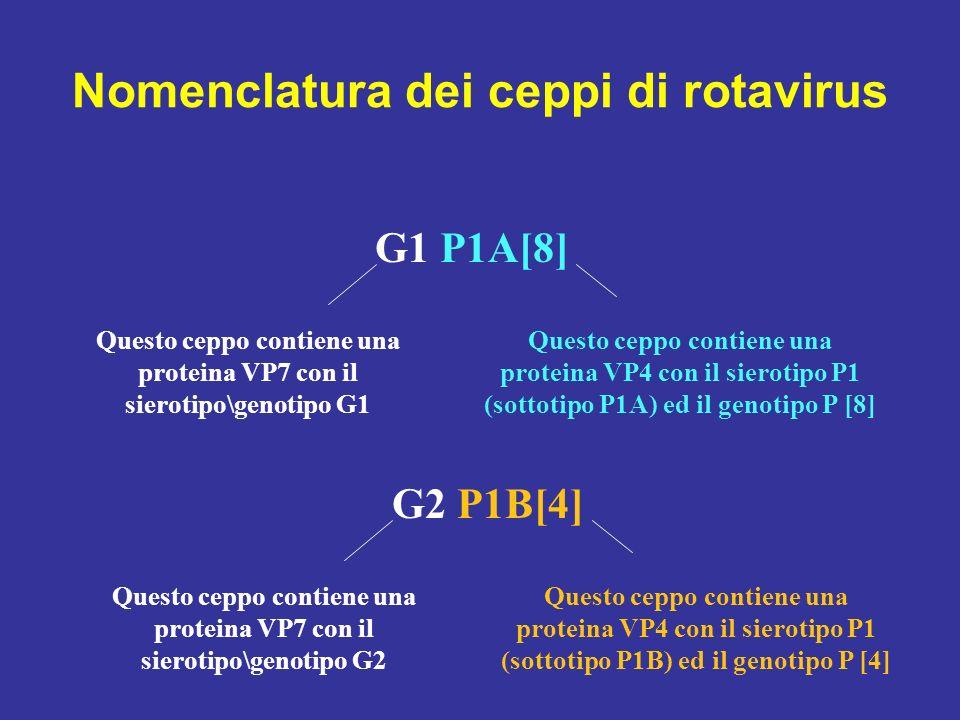Nomenclatura dei ceppi di rotavirus G1 P[8] Questo ceppo contiene una proteina VP7 con il sierotipo\genotipo G1 Questo ceppo contiene una proteina VP4