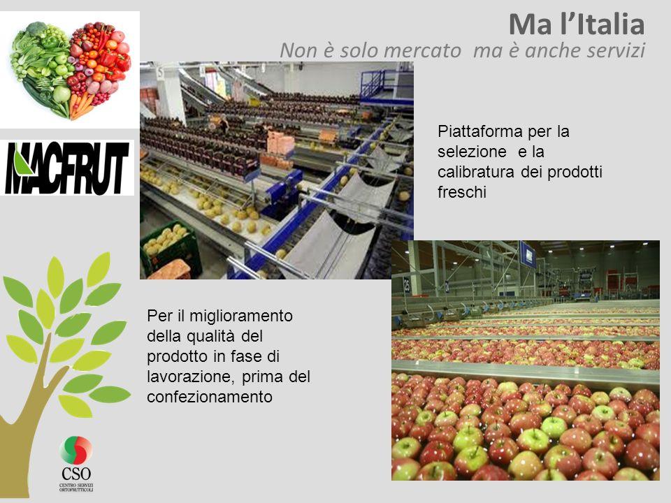 Ma lItalia Non è solo mercato ma è anche servizi Per il miglioramento della qualità del prodotto in fase di lavorazione, prima del confezionamento Pia