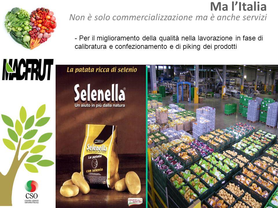 Ma lItalia Non è solo commercializzazione ma è anche servizi - Per il miglioramento della qualità nella lavorazione in fase di calibratura e confezion