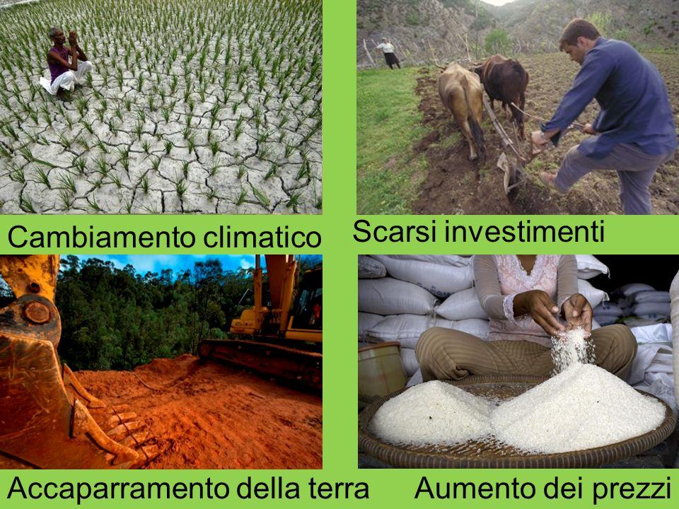 Cambiamento climatico Scarsi investimenti Accaparramento della terraAumento dei prezzi