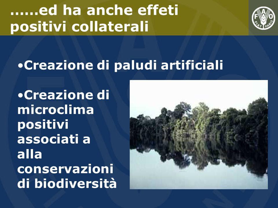 Creazione di paludi artificiali Creazione di microclima positivi associati a alla conservazioni di biodiversità ……ed ha anche effeti positivi collater