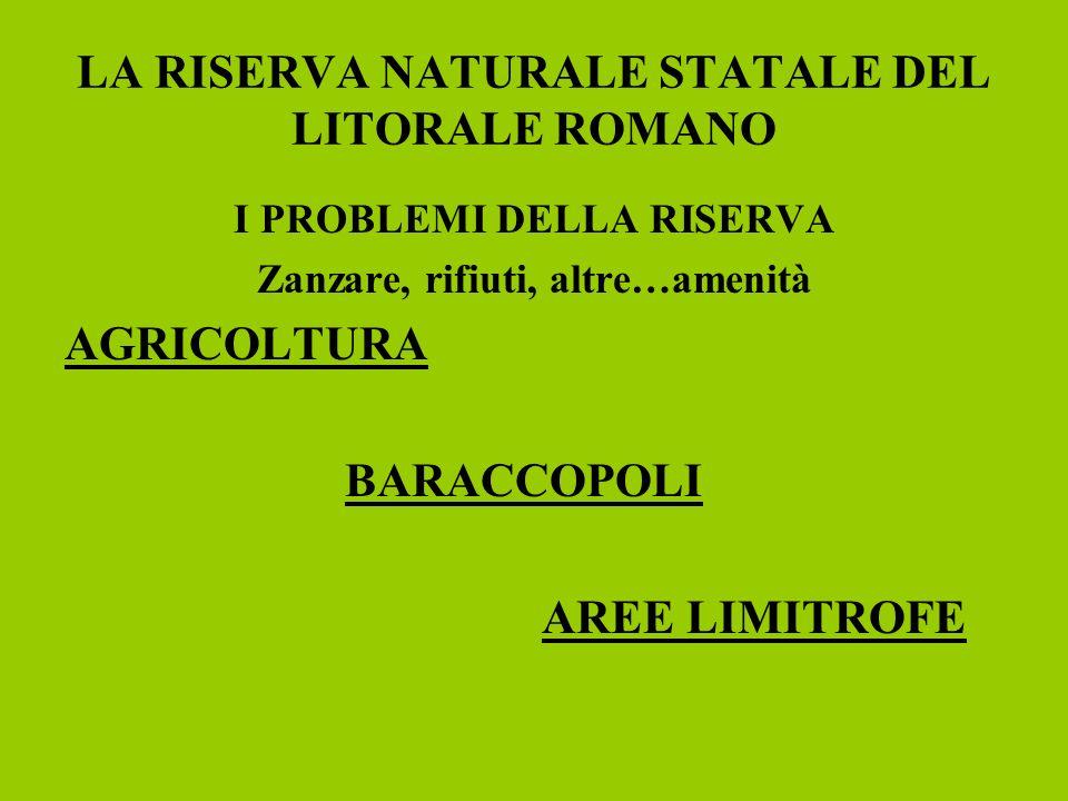 LA RISERVA NATURALE STATALE DEL LITORALE ROMANO I PROBLEMI DELLA RISERVA Zanzare, rifiuti, altre…amenità AGRICOLTURA BARACCOPOLI AREE LIMITROFE