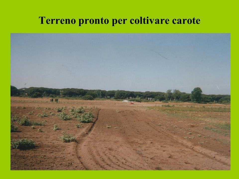 Terreno pronto per coltivare carote