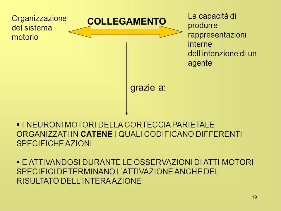 49 La capacità di produrre rappresentazioni interne dellintenzione di un agente Organizzazione del sistema motorio grazie a: I NEURONI MOTORI DELLA CO